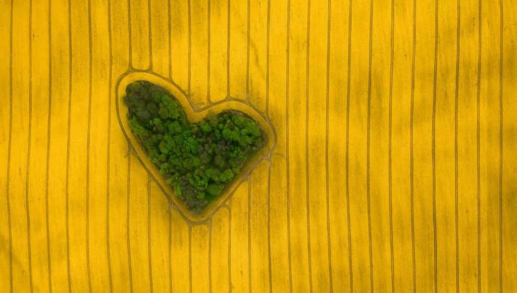"Jeremiasz Gądek, ""Island of Love"""
