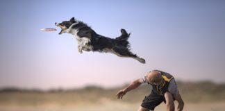 Claudio Piccoli, Flying on the Beach,