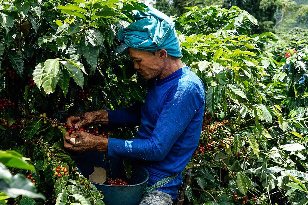 colombia-raccolta-del-caffè