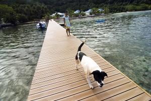 Polinesia francese hip and hop tra le isole per gli amici - Zoomarine bagno coi delfini ...