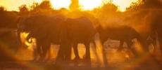 In Botswana con il fotografo: 29 novembre-9 dicembre 2013