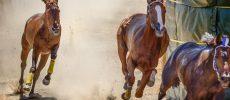 Ronciglione, corri cavallo