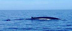 In Liguria a vedere le balene