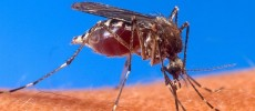 Consigli di viaggio. Malaria, rischi e prevenzione in Africa