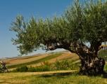 Sambuca di Sicilia. Il borgo dei borghi