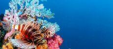 Seychelles, il Sainte Anne Marine National Park