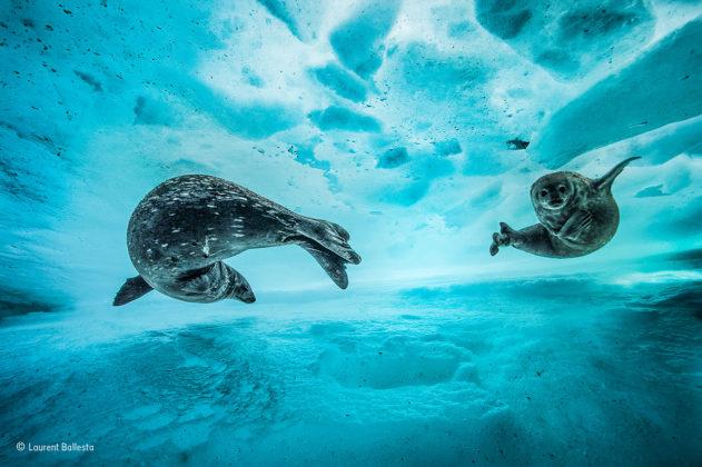 Swim gym © Laurent Ballesta - Wildlife Photographer of the Year