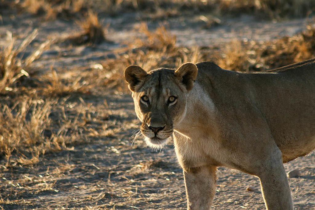 mozambico-leonessa-lago-niassa