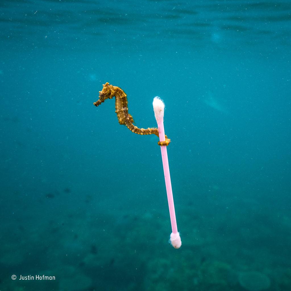 Sewage surfer © Justin Hofman - Wildlife Photographer of the Year