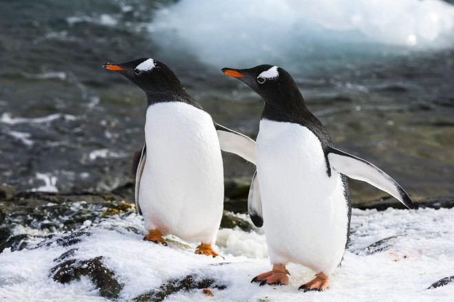 Due pinguini in Antartide