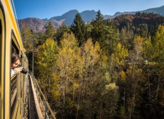 Treno foliage