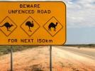 Alla guida nel mondo, le 20 norme più bizzarre dei codici della strada