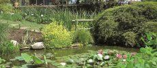 Negli orti botanici lombardi aspettando il solstizio d'estate