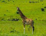 Kenya, Mare di Giada