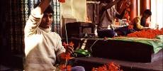 Calcutta. Nella città vecchia tra ghirlande, miti e impagliatori