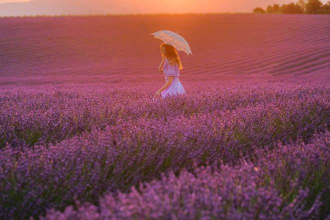 provenza_lavanda_tramonto