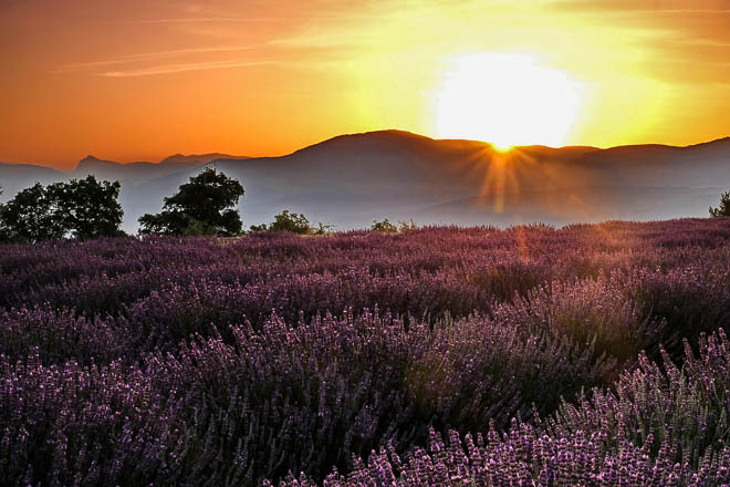 Provenza_tramonto_campi_lavanda