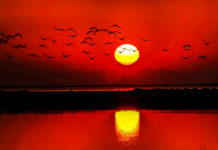 Fenicotteri in volo sugli stagni della Camargue