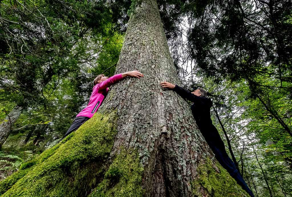 alberi-secolari-trentino-mezzano