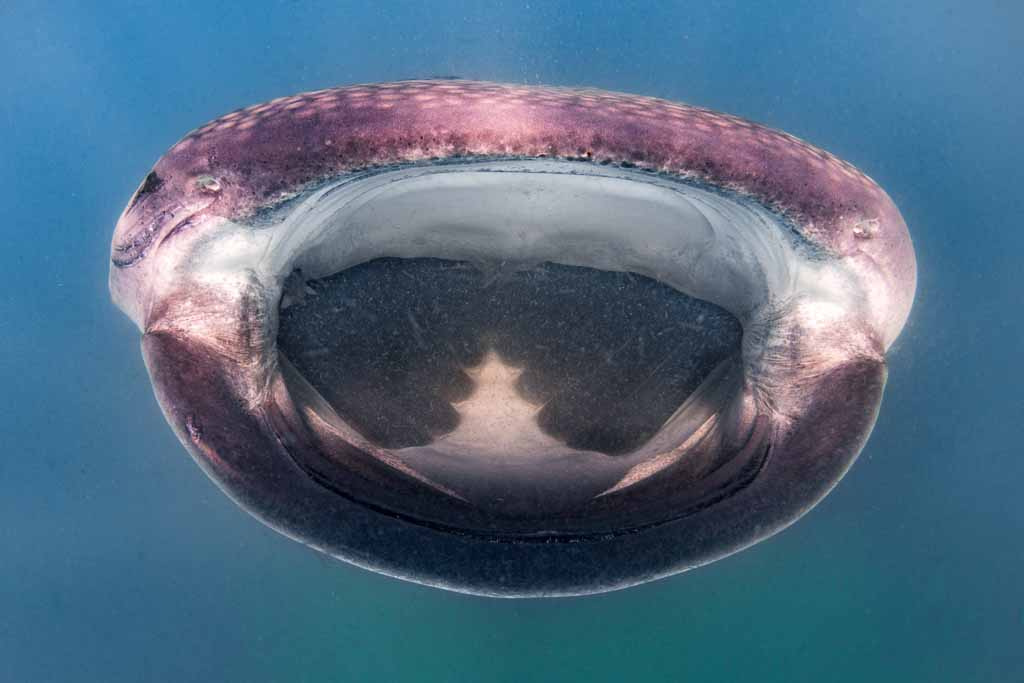 baja-california-squalo-balena