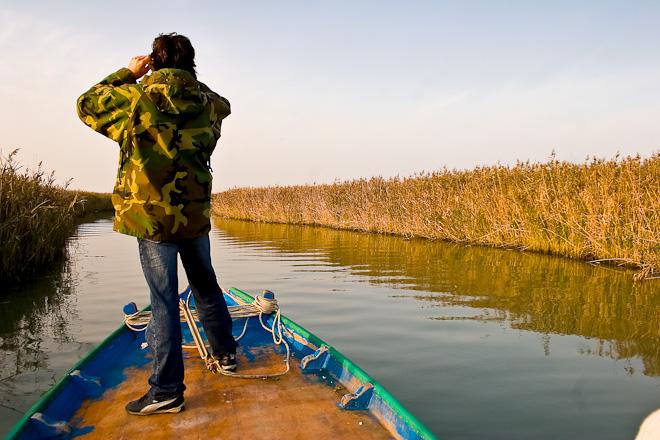 Birdwatching nel Parco regionale del Delta del Po