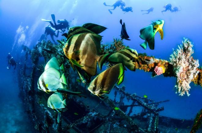 Diving_Alma Jane wreck_shutterstock_178557659