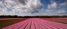 In Olanda è Flower Power