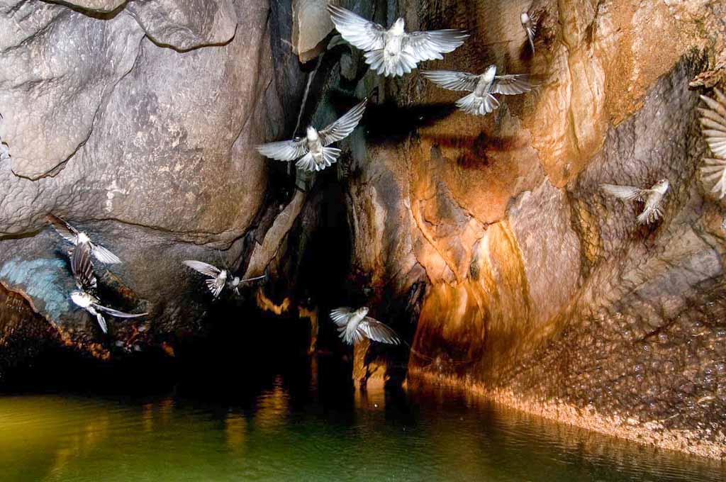 Filippine_Il volo delle rondini in grotta (foto Paolo Petrignani-La Venta) 1