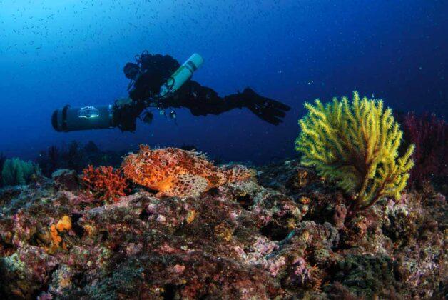 isole-Tremiti-puglia-fondali-subacquei