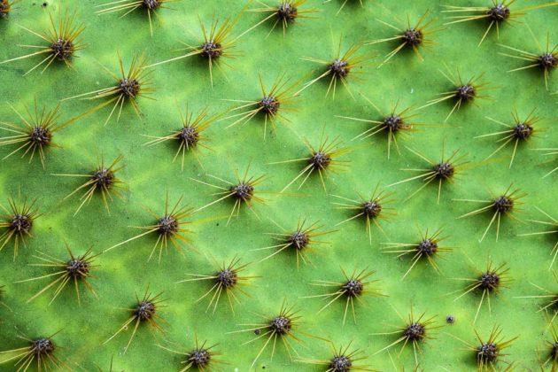 Cactus, Galapagos, Ecuador