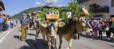 Trentino, la Desmontegada di Primiero fa tappa anche a Norcia