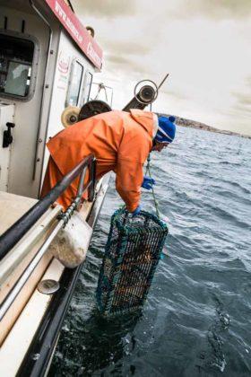 Pesca delle aragoste
