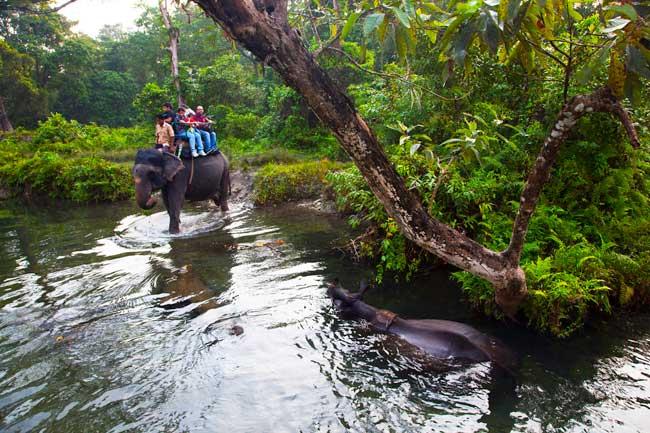 Escursioni nel Jaldapara National Park