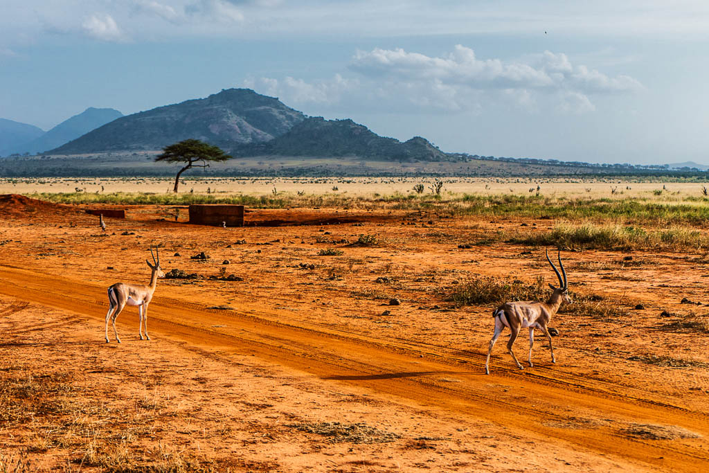 Kenya_masai_mara
