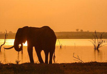 Zimbabwe, ritorno alle origini