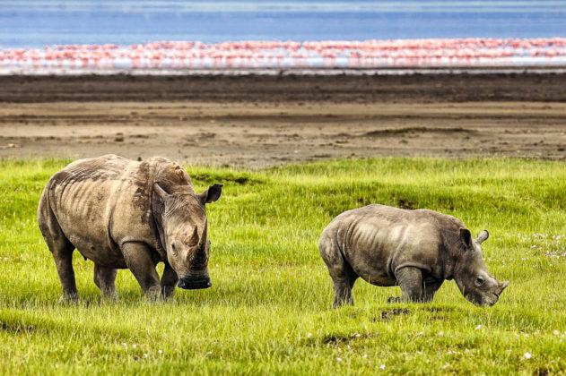 kenya-rinoceronti