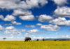 kenya-savana-elefante