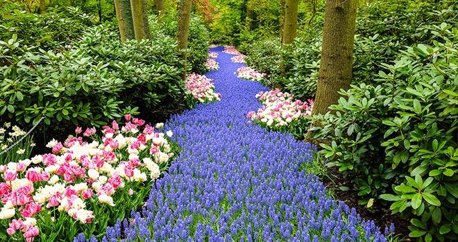 Keukenhof-park-River-of-flowers
