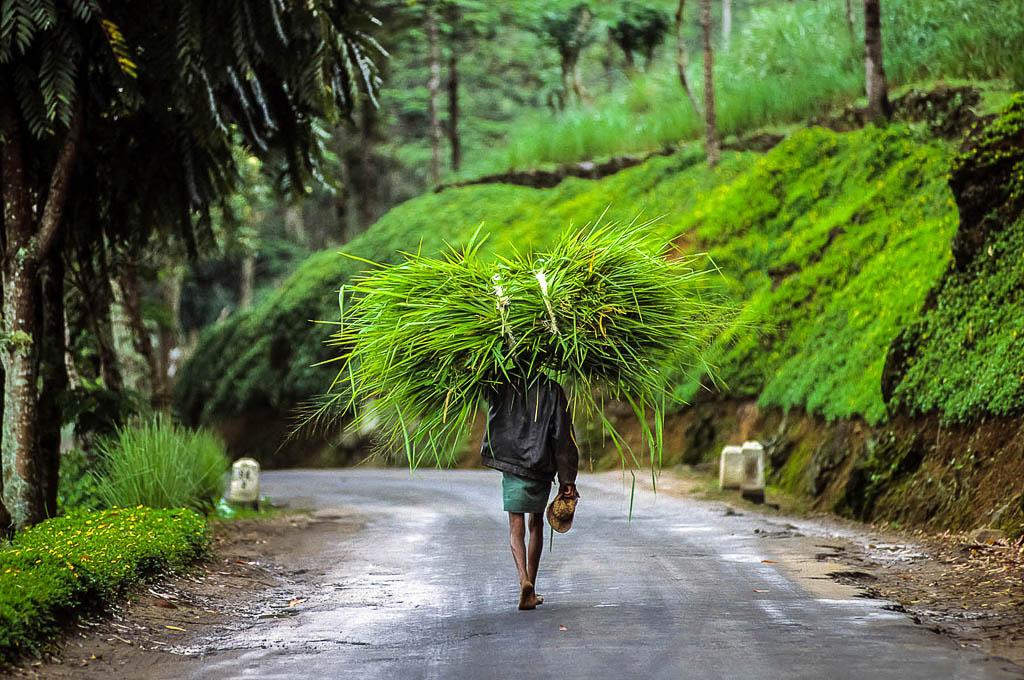 Sri-Lanka-nuwara-eliya