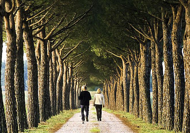 Europa Italia Umbria Un viale alberato nella campagna di Petrignano del Lago Petrignano del Lago, Trasimeno Lake, Umbria, Italy, Europe