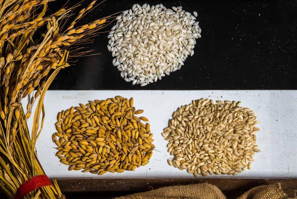 lomellina-riso-cascina-alberona-diversi-tipi-di-riso
