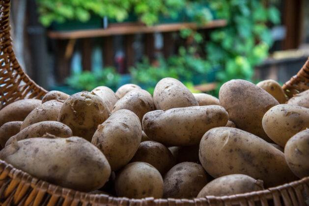 val-di-zoldo-patate