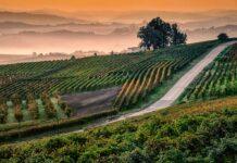 langhe-colline-nebbia