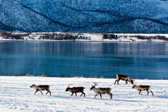 Norvegia Lofoten (© Foto di Sergio Pitamitz)