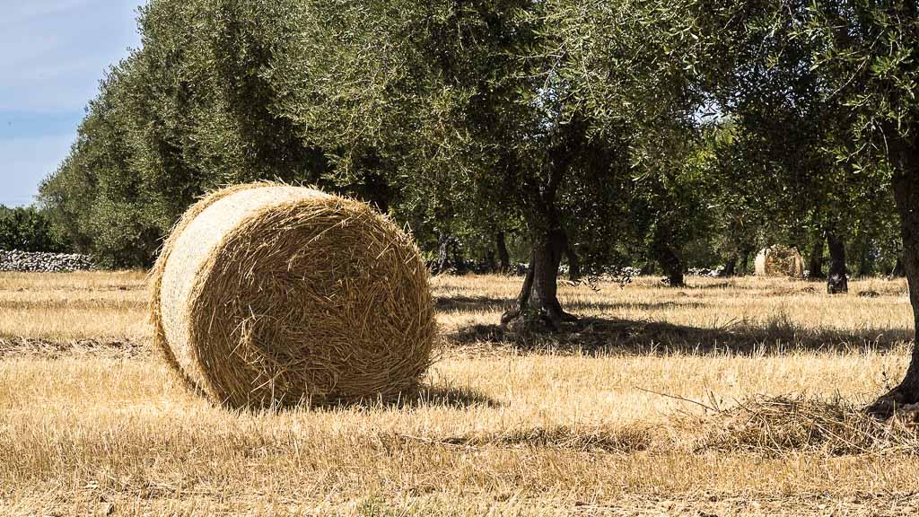 Puglia-Masseria-Bacano