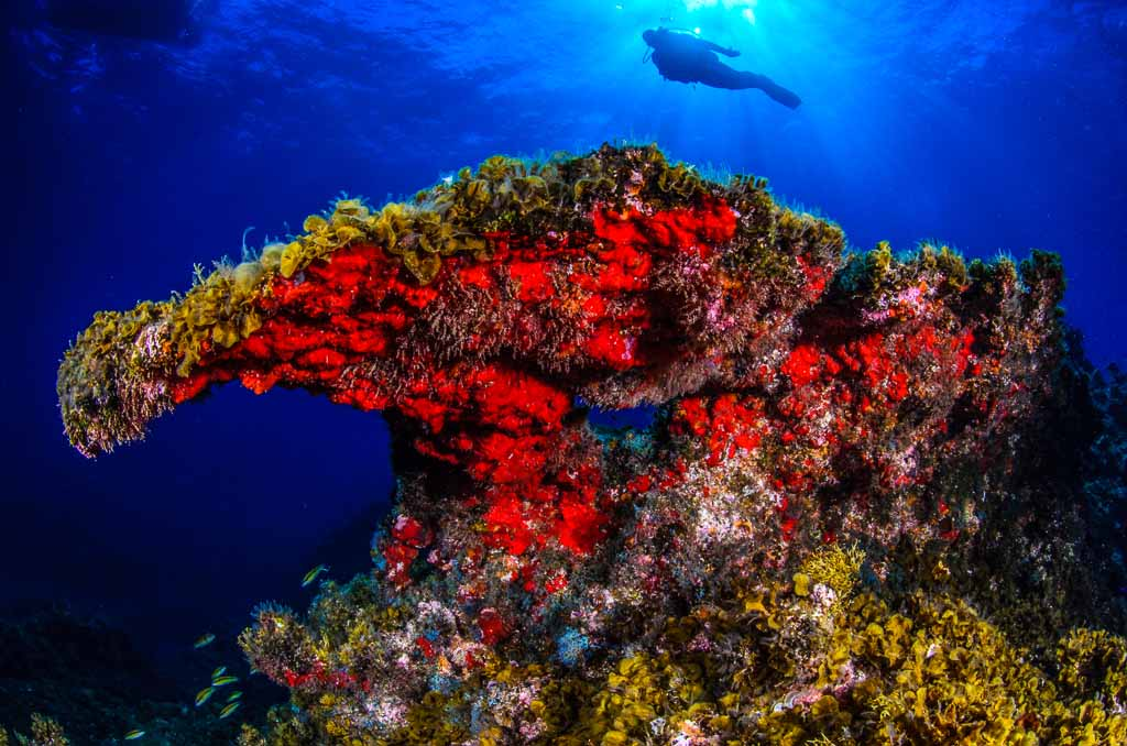Riserva marina Punta Restinga-El-Hierro-Canarie