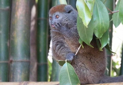 Madagascar, paese del cuore