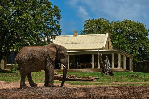 elefante_addo_parco_nazionale