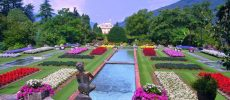 Piante e fiori sul Verbano