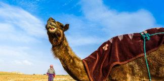 giordania-Wadi-Araba
